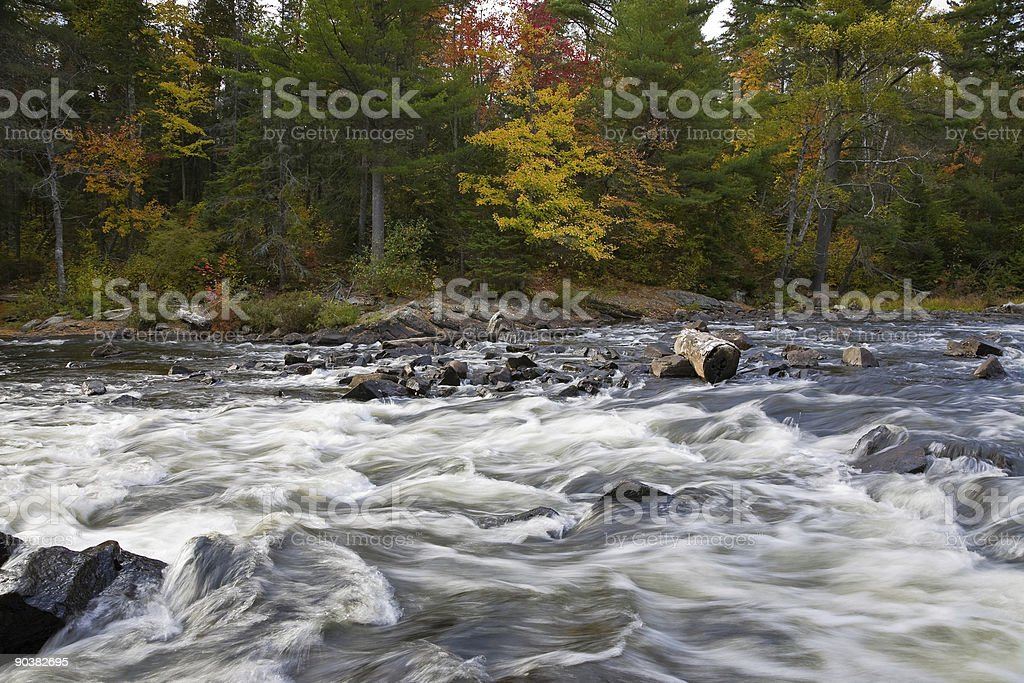 Rapids in the forest royalty-free stock photo