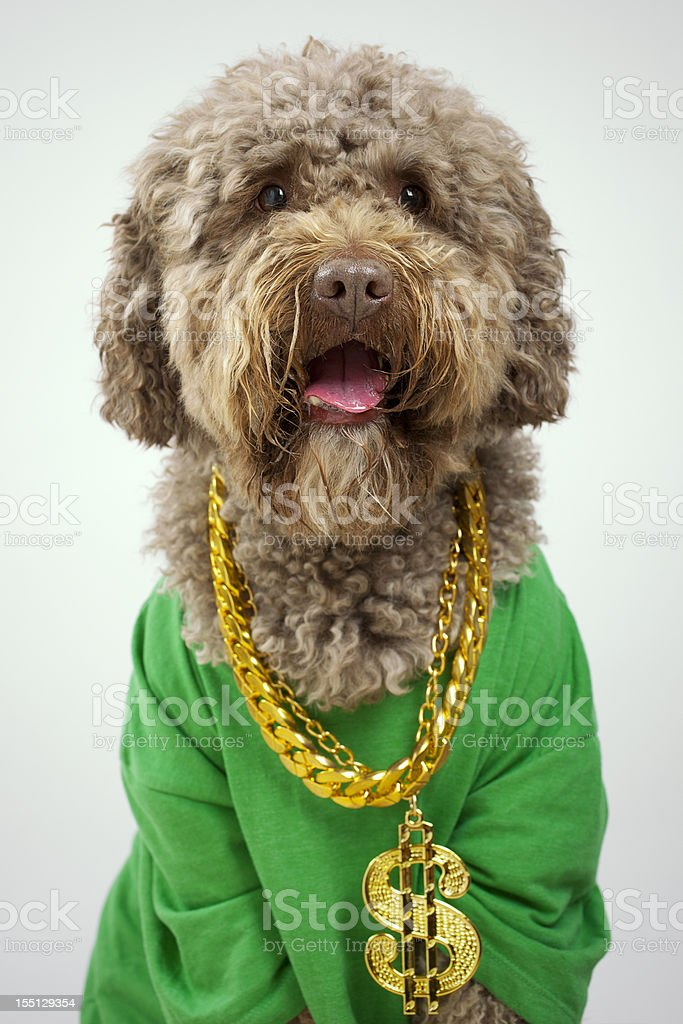 Rapper Dog royalty-free stock photo