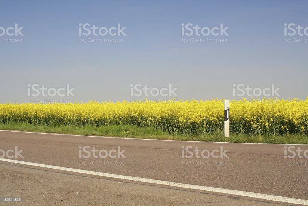 Rapsfeld am Straßenrand stock photo