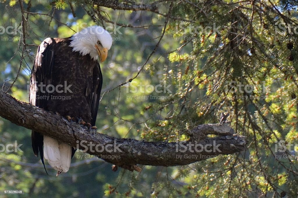 Raptors and Eagles stock photo