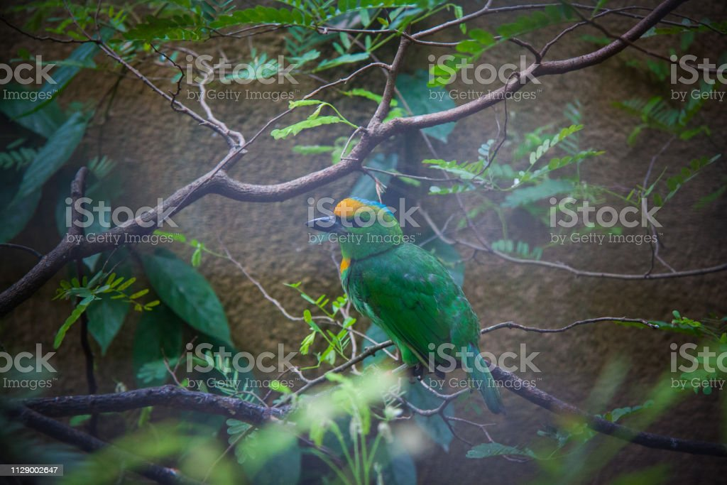 rare animal species in Bali Birds Park , environmental conservation...