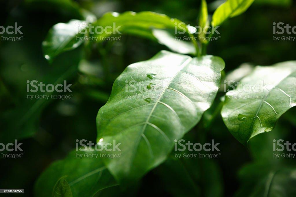Seltene Exotische Tropische Pflanzen Wachsen Im Botanischen Garten ...