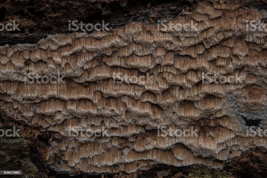 Rare fungi on dead wood in Fontainebleau stock photo