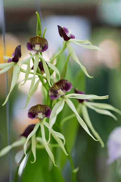 einzigartige hybrid-orchidee blume - seltene pflanzen stock-fotos und bilder