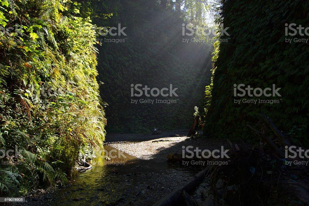 Rare Redwoods Gem stock photo
