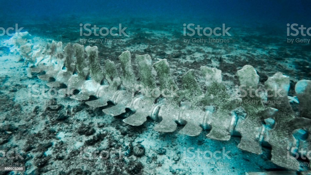 Rare Whale Skeleton Underwater stock photo