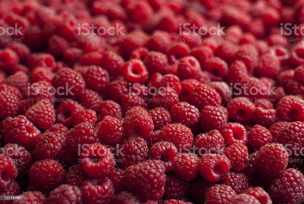 Raspberries. royalty-free stock photo