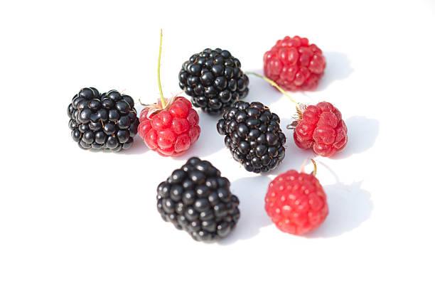 Raspberry & blackberry stock photo