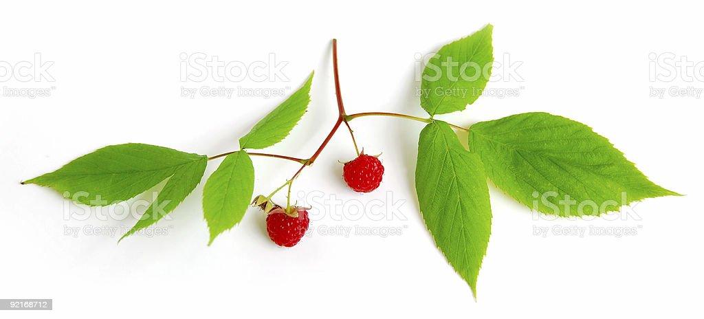 Raspberry branch on white royalty-free stock photo