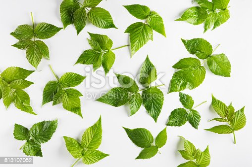 istock Raspberry leaves on white background, pattern 813107052