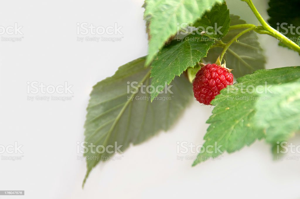 Raspberry on White royalty-free stock photo