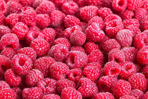 raspberry - hallon bildbanksfoton och bilder