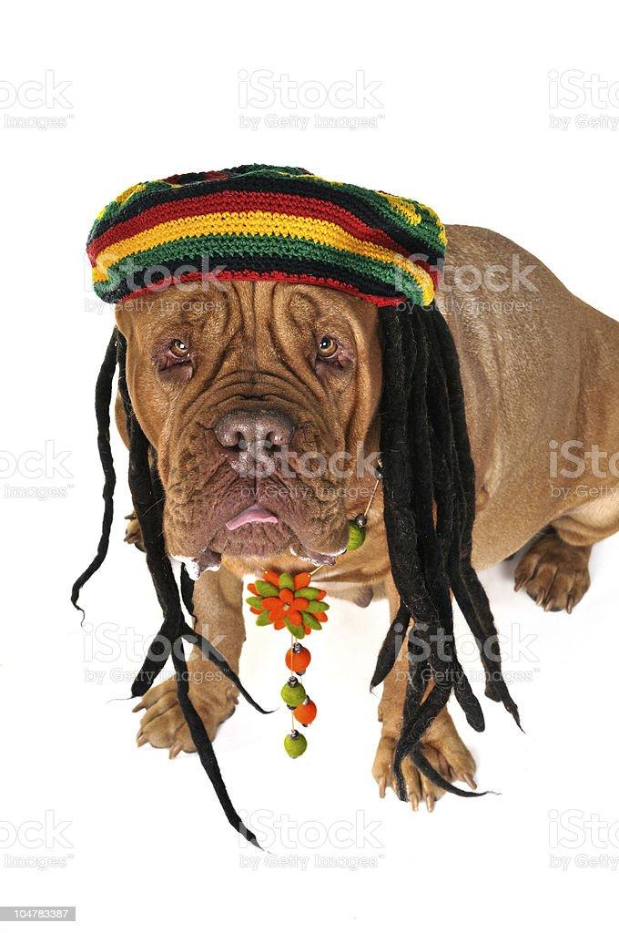 Rasta Doggy royalty-free stock photo