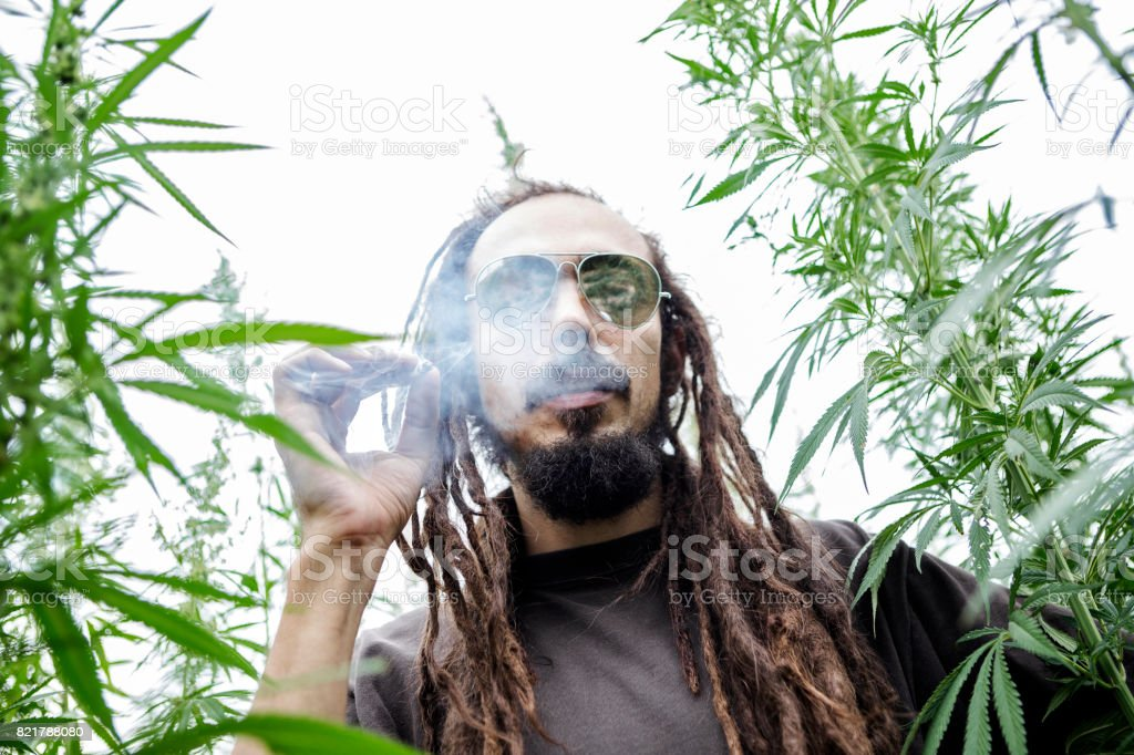 Rastafarian smoking marijuana joint in cannabis field stock photo