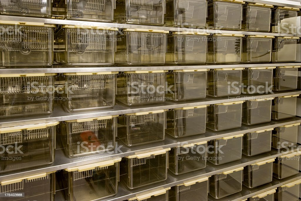 Rat Cages for Animal Research stock photo