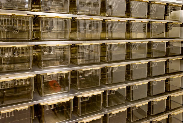 """Rat Cages for Animal Research """"Rows of new, unused rat cages."""" animal testing stock pictures, royalty-free photos & images"""