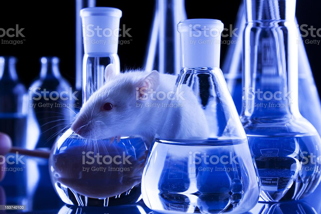 Rat in Lab stock photo