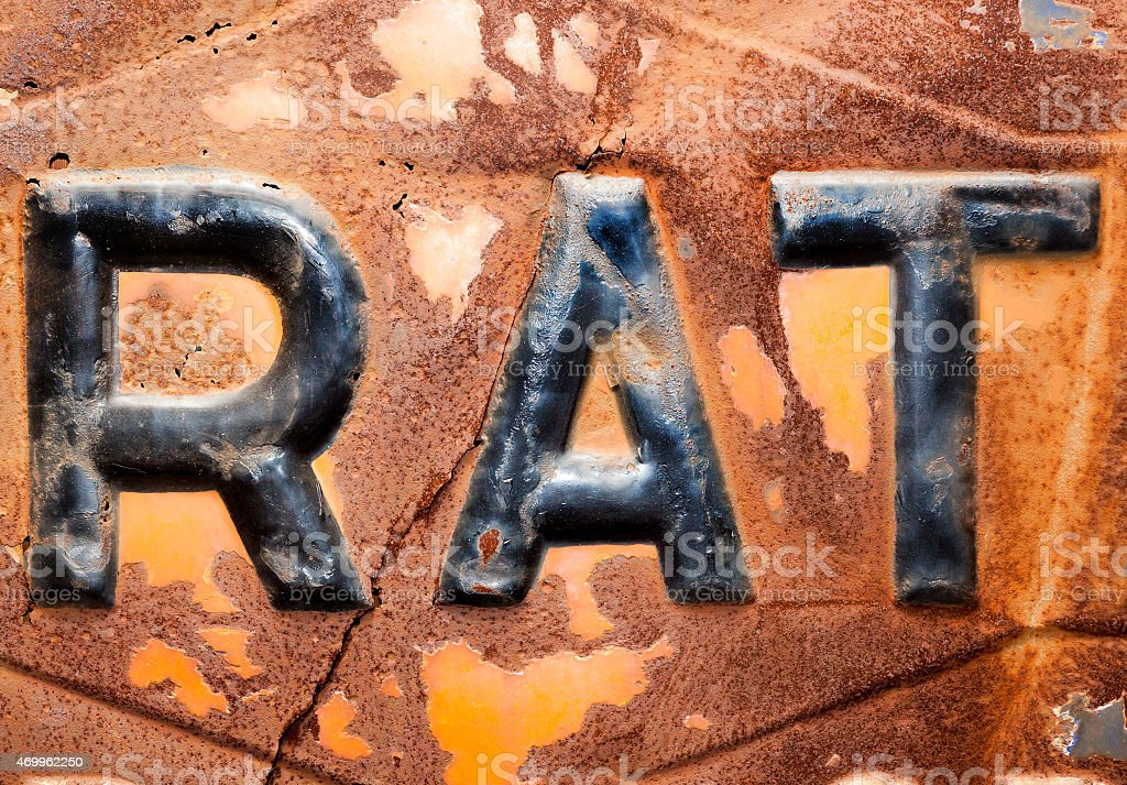 rat in letters stock photo