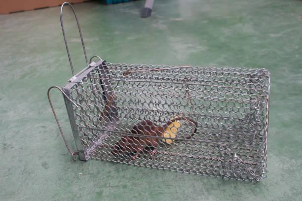 """rat dans la """"cage"""" - cage animal nuit photos et images de collection"""
