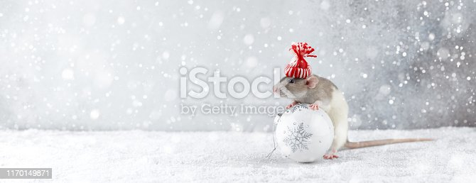 istock Rat in winter hat holding glass ball decoration 1170149871
