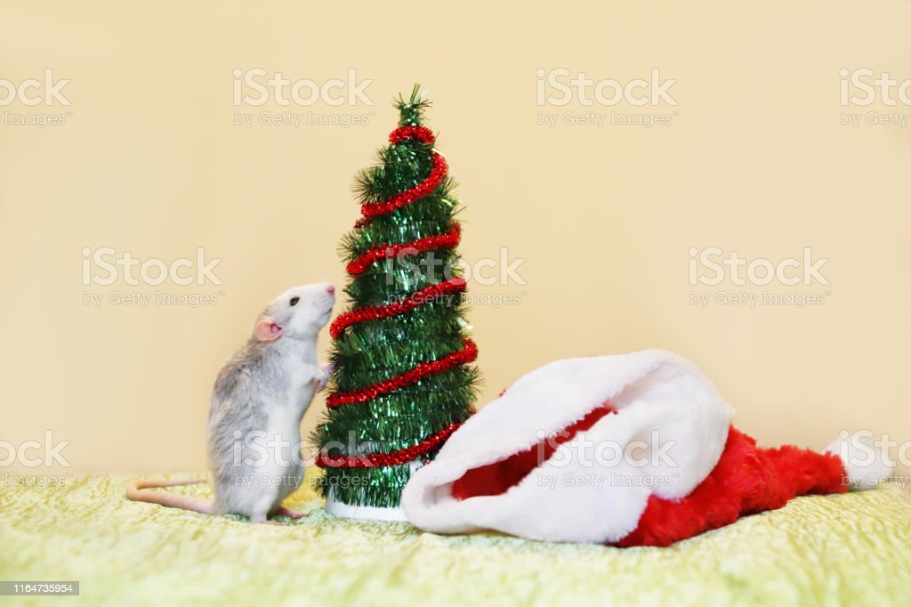 Eastern Christmas 2020 A Rat Is Standing Near The Christmas Tree Symbol Of The Chinese