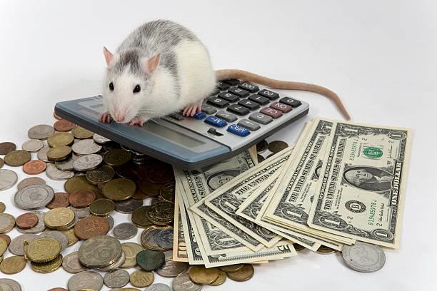 Rata en la calculadora de precios - foto de stock