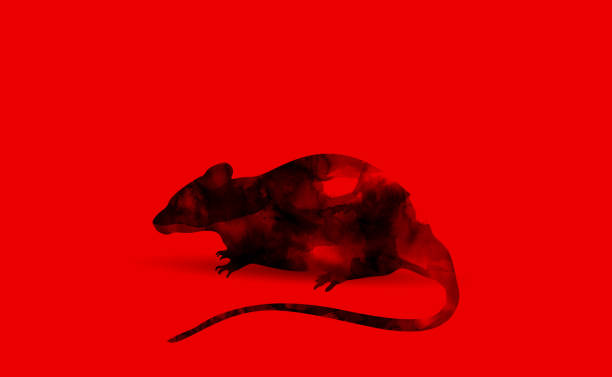 rat shape in black ink brush digital paint on red background created by me stock photo