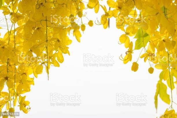 Ratchaphruek cassia fistula flowers daisy yellow flowers on summer picture id943713124?b=1&k=6&m=943713124&s=612x612&h=flwnjullysglywfqoawcwgwrbu2pksankikjj3rup8y=