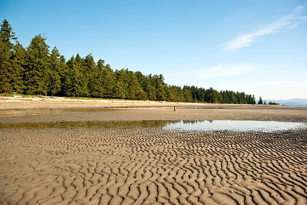 rathtrevor beach - provincial park stock photos and pictures