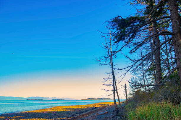rathtrevor beach provincial park during low tide in vancouver island - provincial park stock photos and pictures