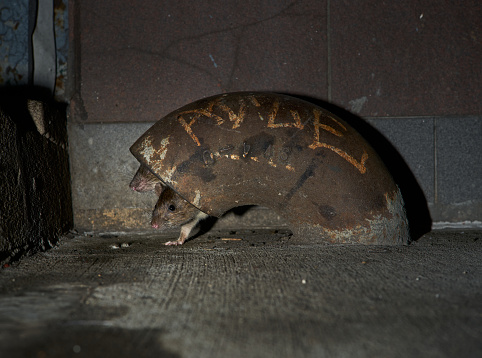 NYC rats emerge from hiding place