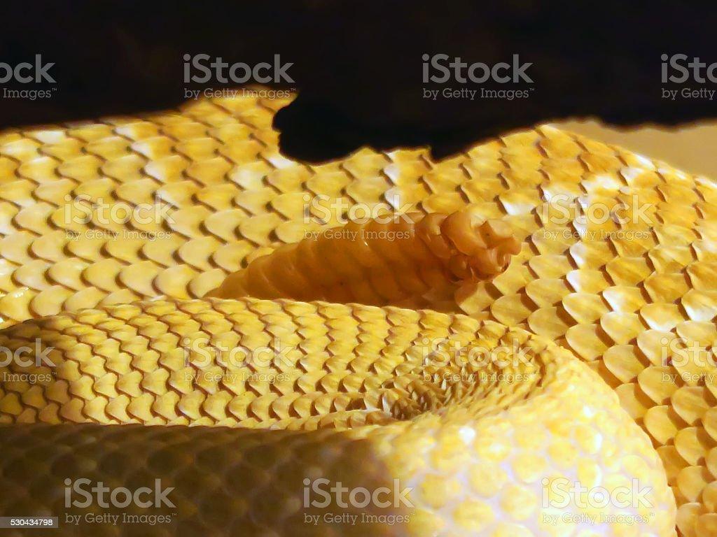 Rattle of a Western Diamondback Rattlesnake stock photo