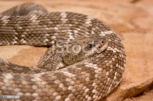 A rattlesnake sitting on a rock.
