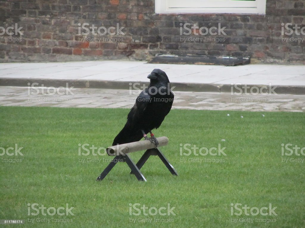 Raven at the Tower stock photo