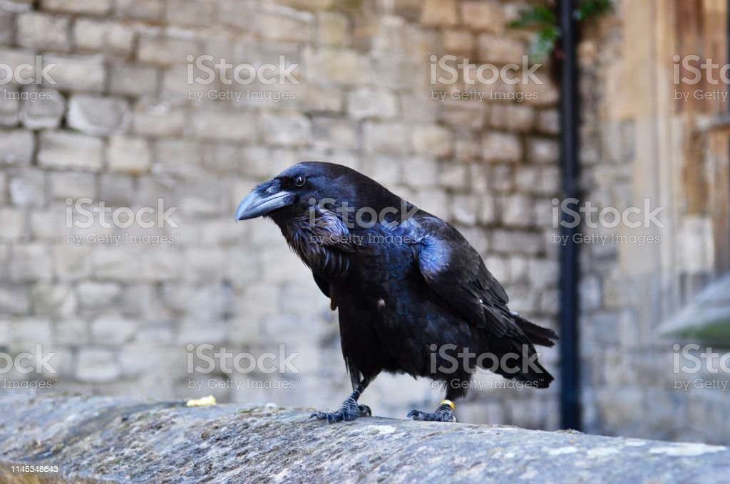Raven Raven Architecture Stock Photo