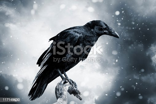Black raven with stormy sky