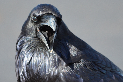 Took this picture of the Raven at the Petrified Forest near Holbrook, AZ in January.