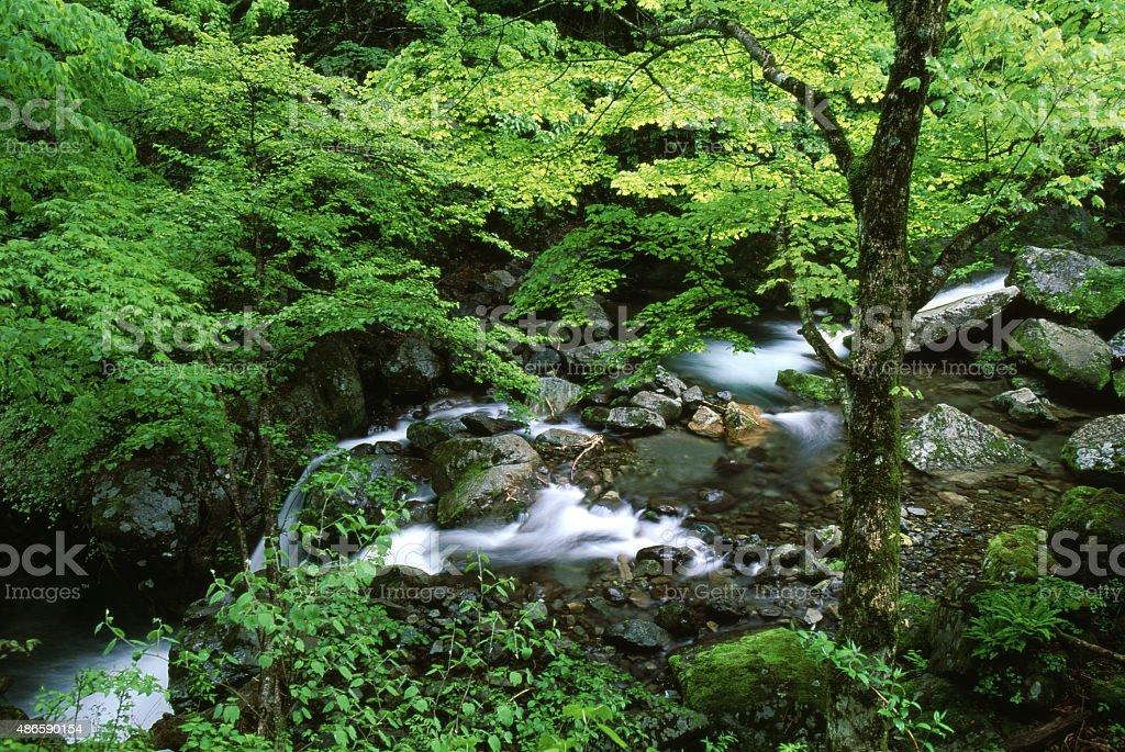 峡谷の新鮮なグリーン ロイヤリティフリーストックフォト