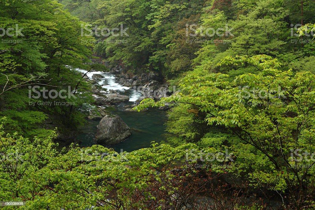 峡谷の新鮮なグリーン ストックフォト