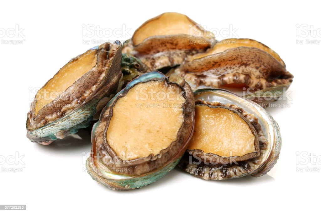 Raw abalones   isolated   on white background stock photo