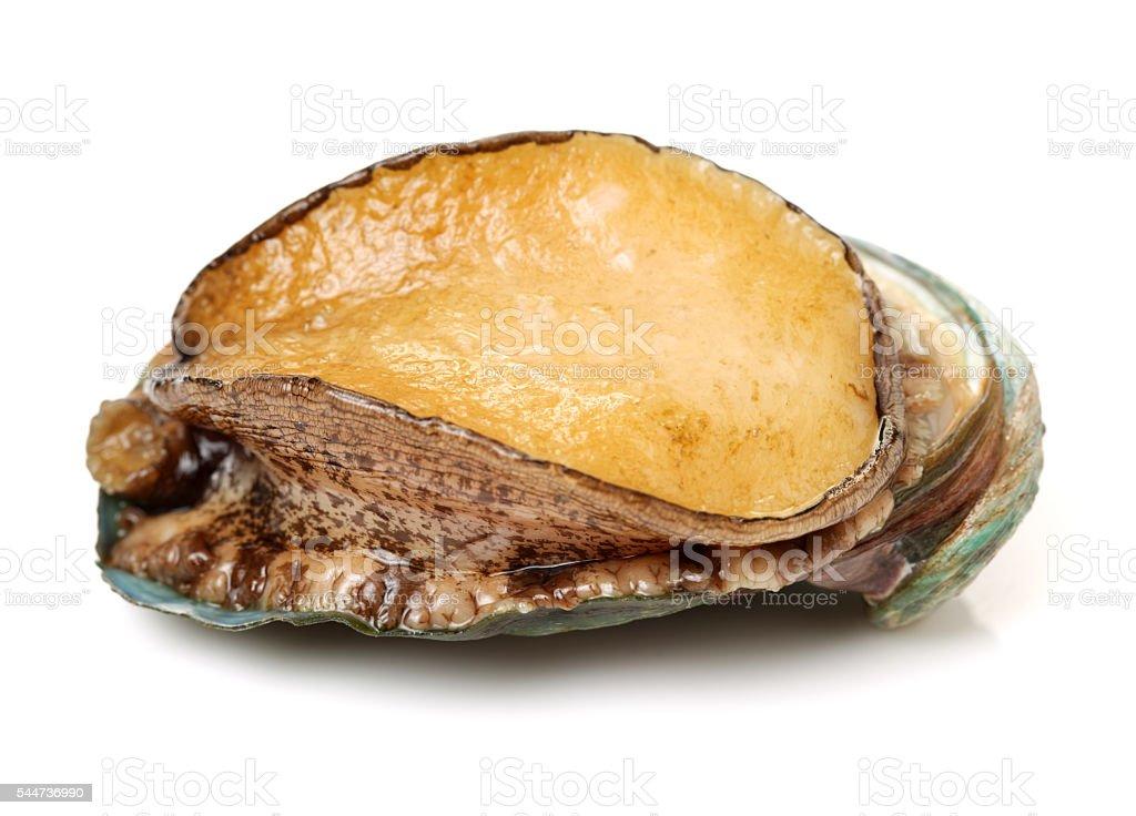 날것 abalones 스톡 사진