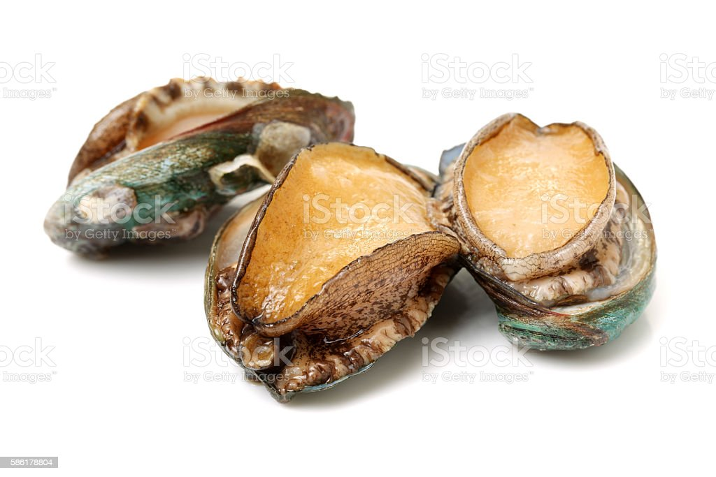 Raw abalones stock photo