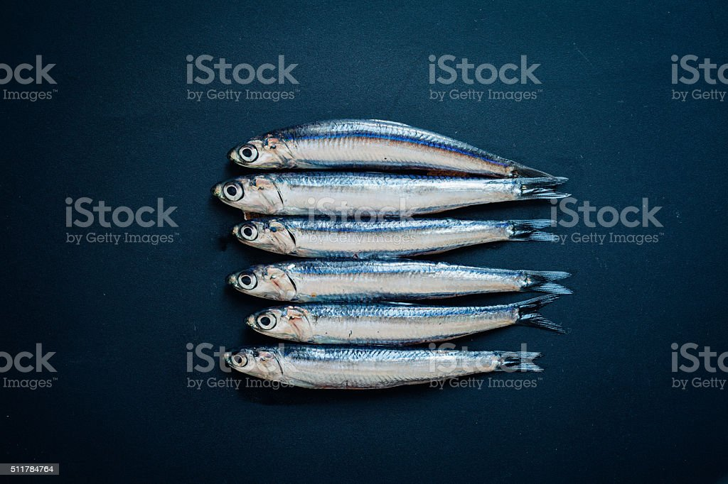 Raw Anchovies stock photo