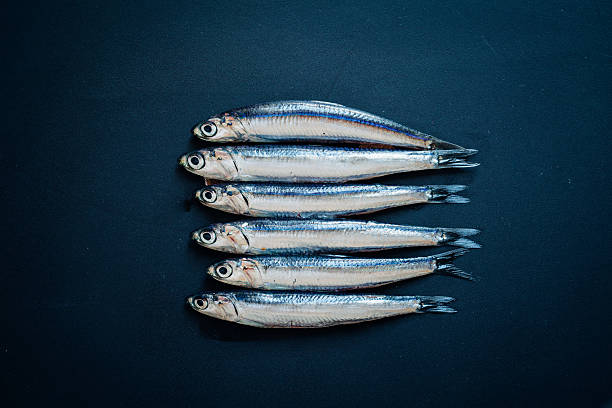 raw anchovies - cod liver oil stock photos and pictures