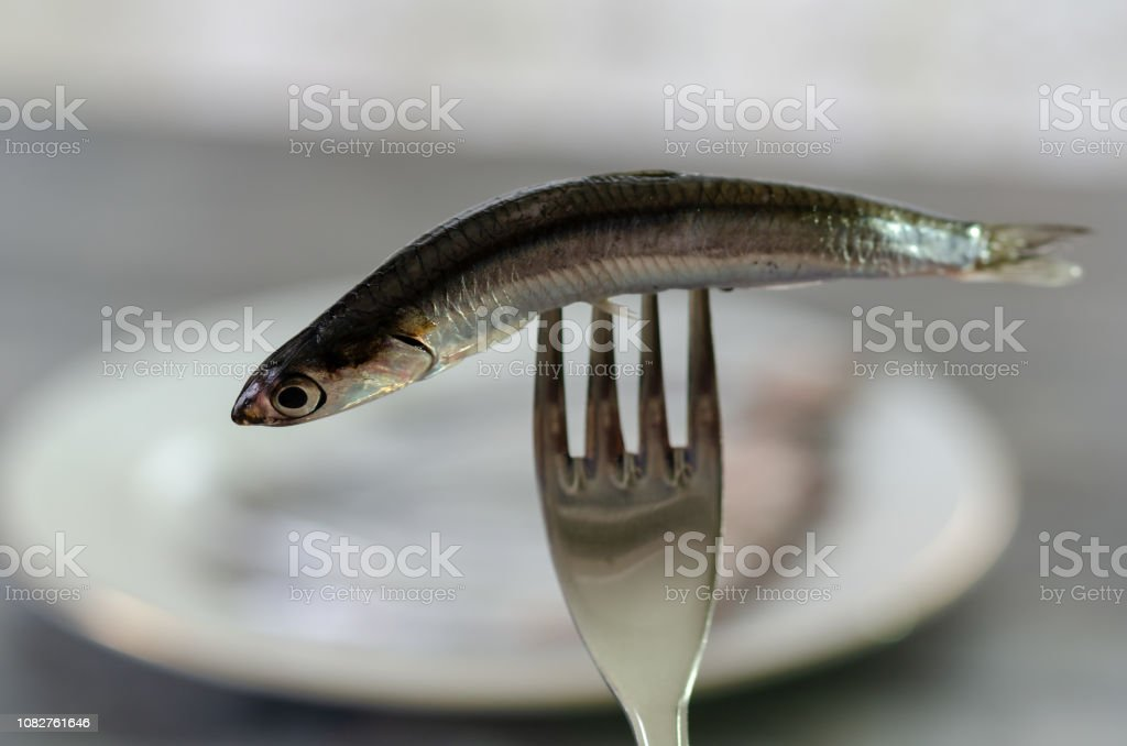 Raw and fresh anchovy fish stock photo