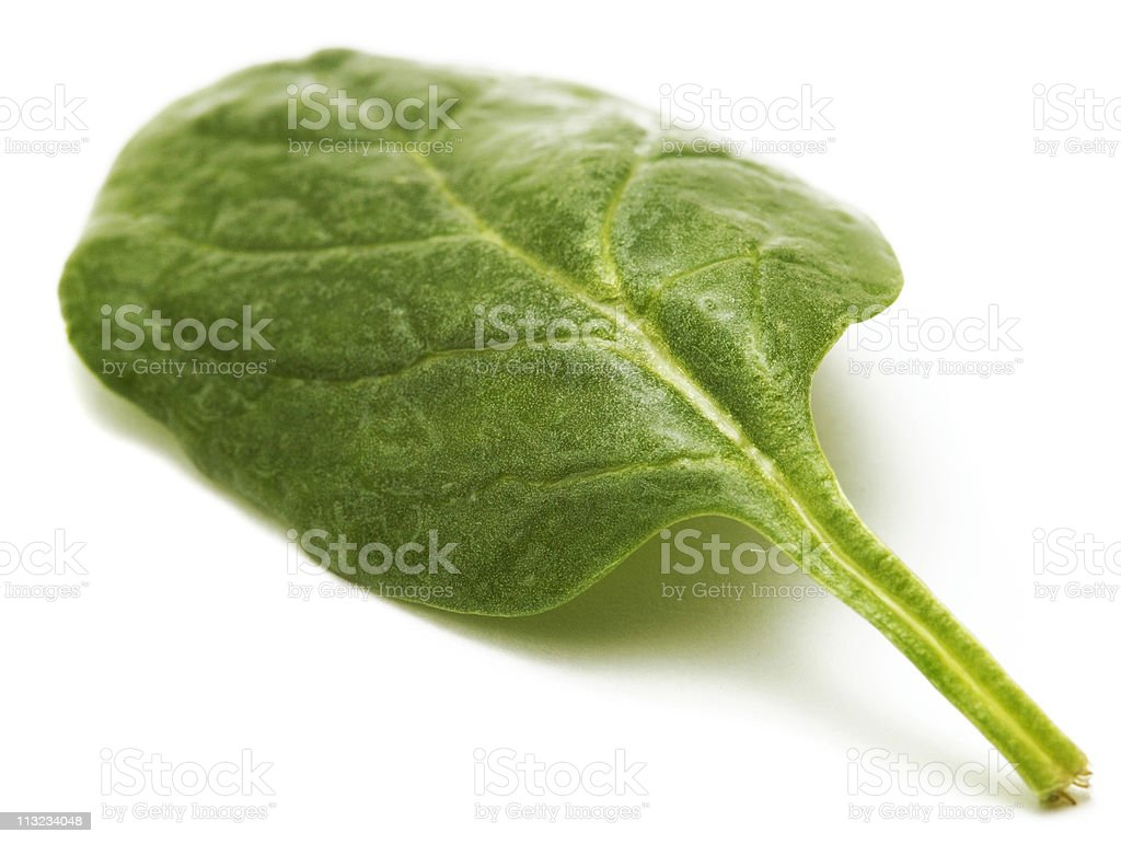 Raw Baby spinach leaf isolated against white royalty-free stock photo