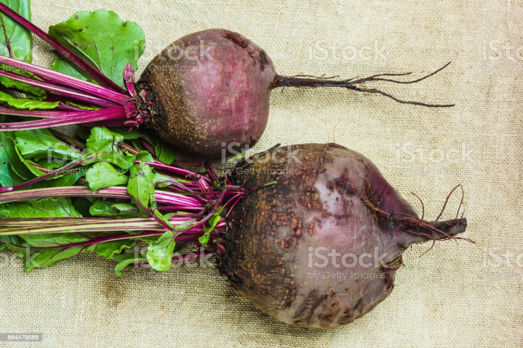 raw  beets stock photo