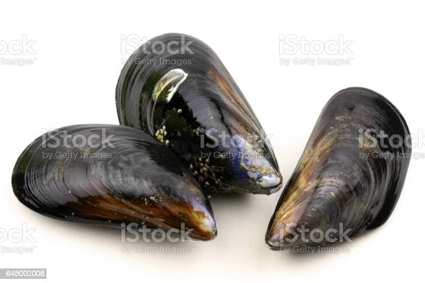 Raw blue mussels on a white background