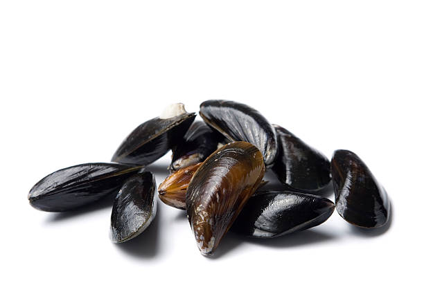 Raw blue mussels on a white background stock photo