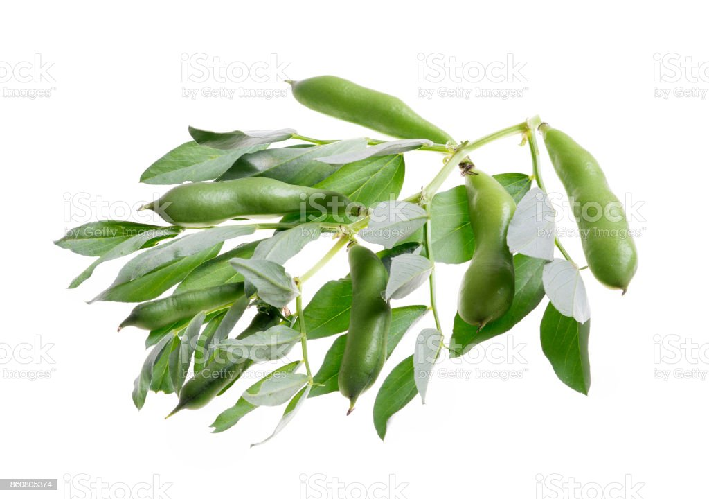 Raw  broad beans and  green leaves stock photo